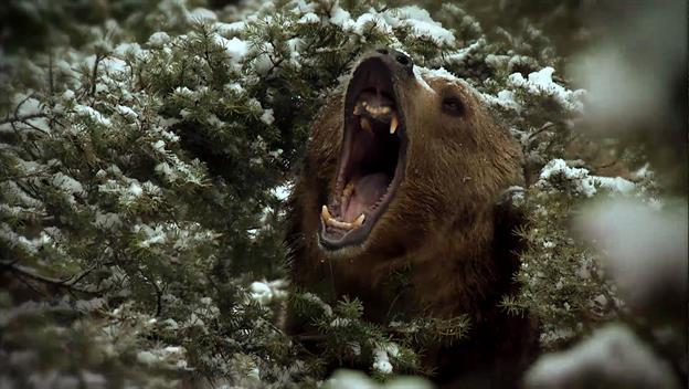 Mountain Men: Man vs. Bear
