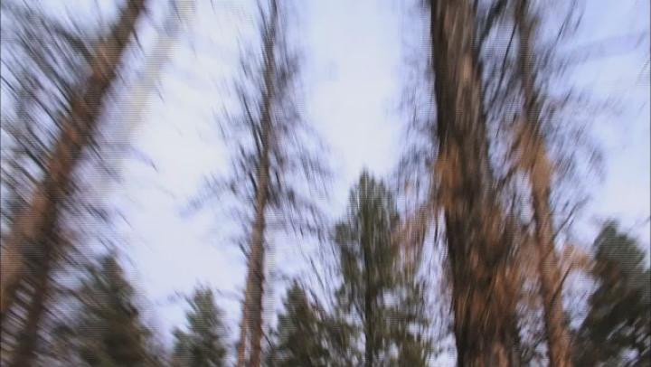 Ax Men: Beetle Wood